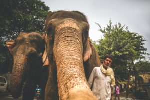 The Elephant in the City: The Trialectics of Space in the Rurban Elephants of Southern India